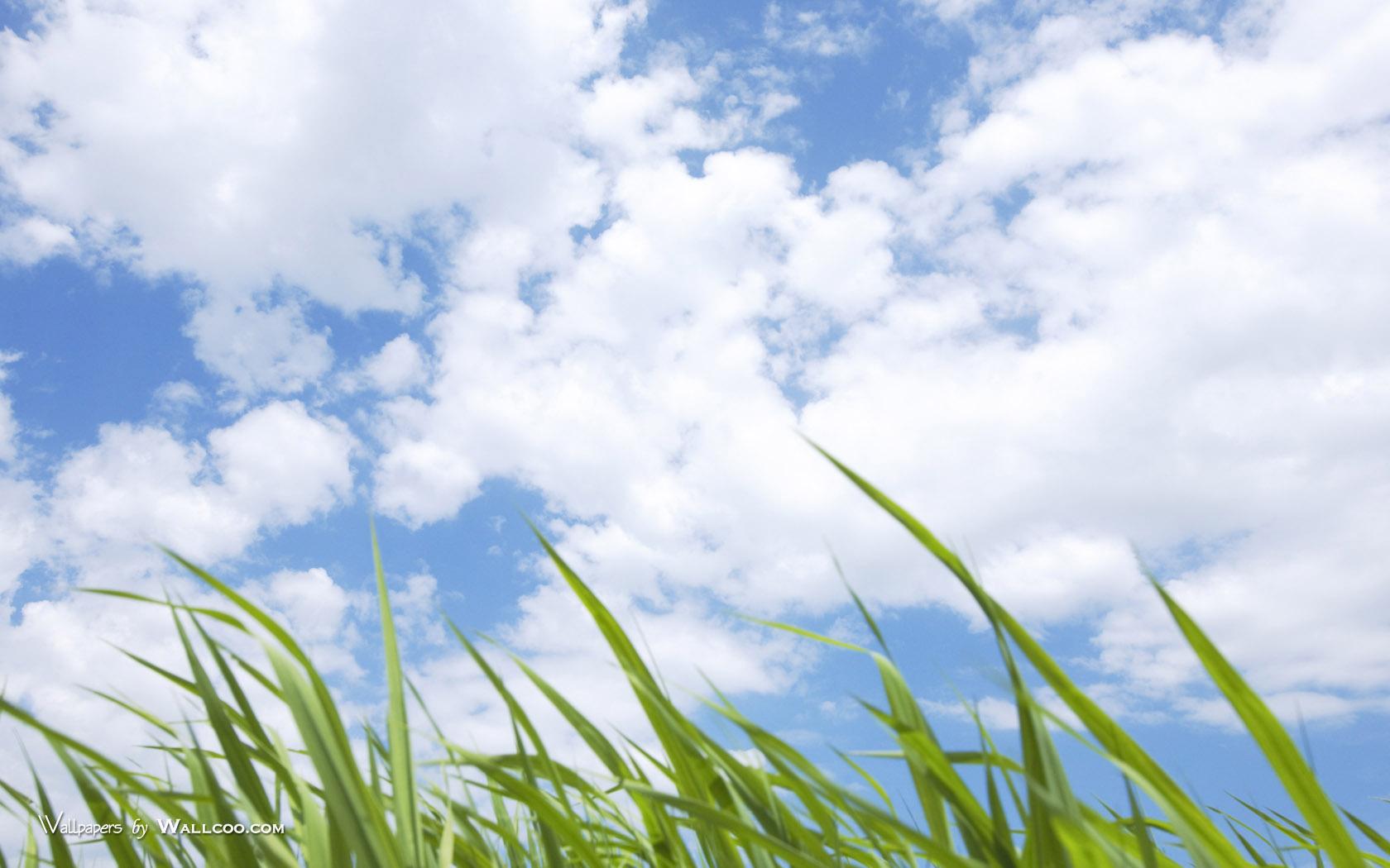 1050Green Grass Photos Grassland under blue Sky壁纸,青青草原 草原天空摄影壁纸壁纸图片