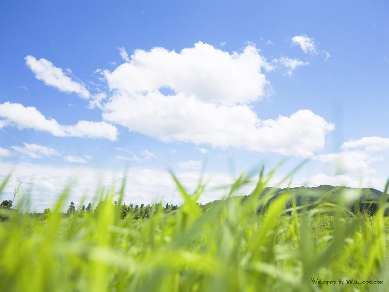 200野外草地图片 草原草地壁纸壁纸,青青草原 草原天空摄影壁纸壁