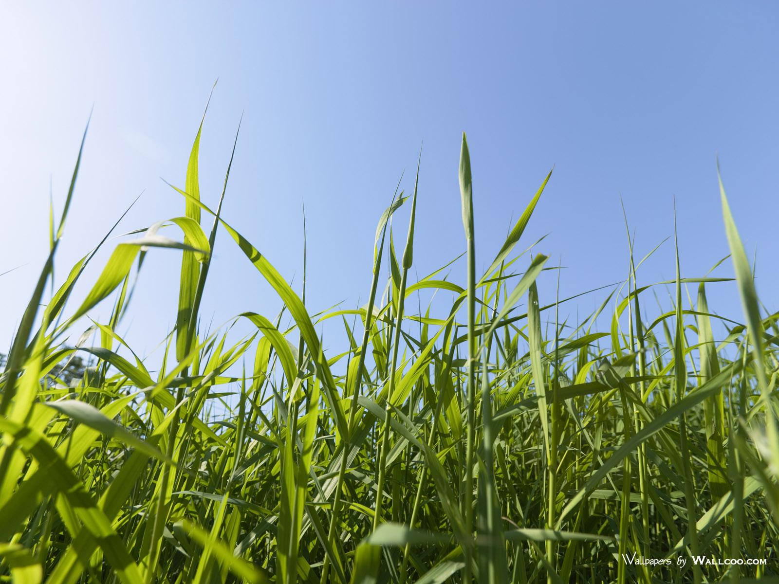 1200天空草原图片 草地青草图片壁纸,青青草原 草原天空摄影壁纸壁