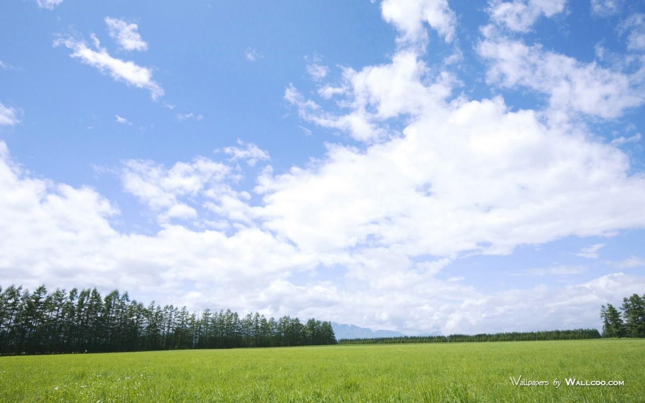 800原野草原草地图片 Vast Grassland Photography壁纸,青青草原 草