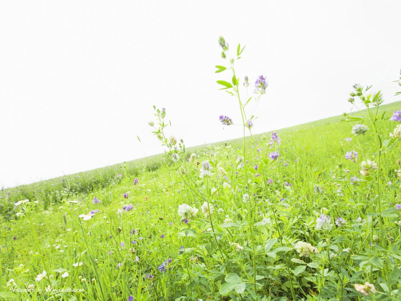 1050天空草原图片 草地上的野花图片壁纸,青青草原 草原天空摄影壁纸壁纸图片