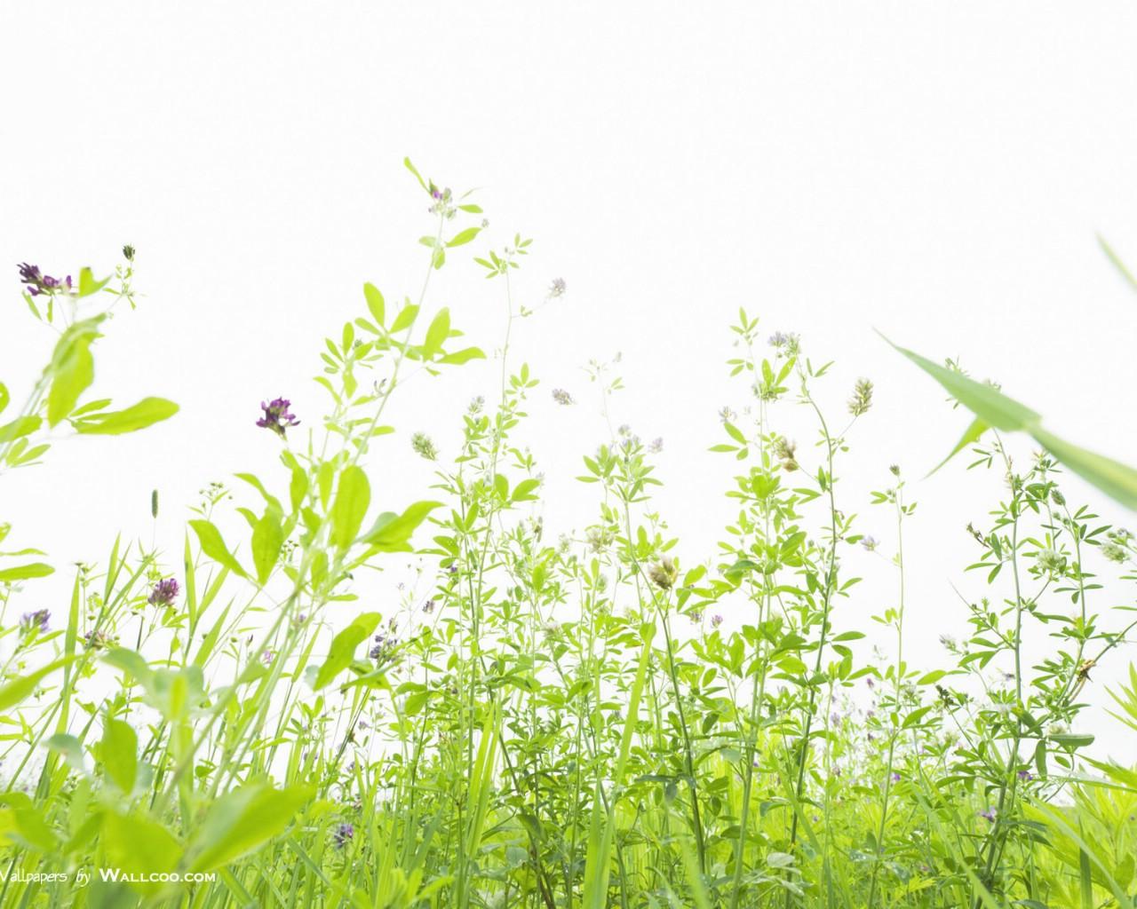 1024天空草原图片 草地上的野花图片壁纸,青青草原 草原天空摄影壁纸壁纸图片