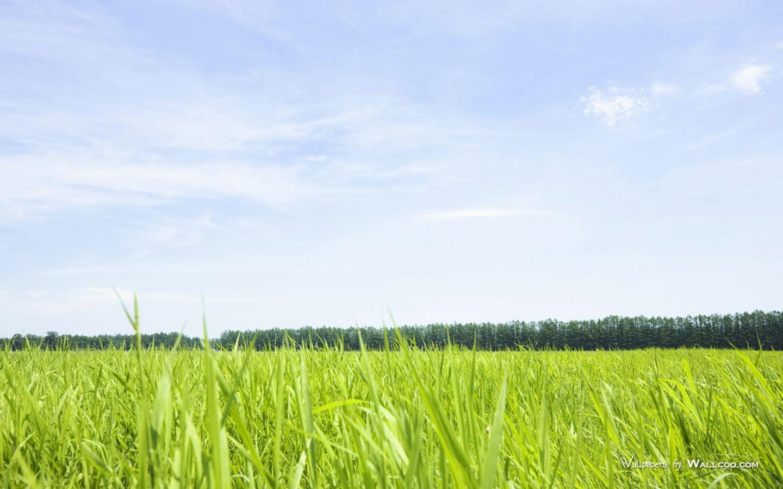 900原野草原草地图片 Vast Grassland Photography壁纸,青青草原 草