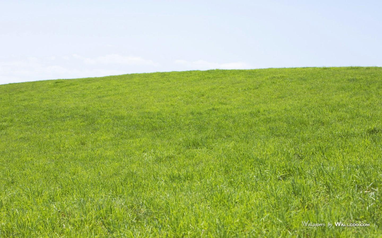900野外草地图片 草原草地壁纸壁纸,青青草原 草原天空摄影壁纸壁纸