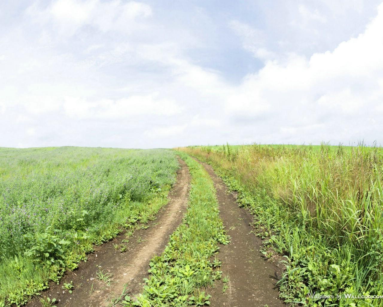 024野外草地图片 草原草地壁纸壁纸,青青草原 草原天空摄影壁纸壁