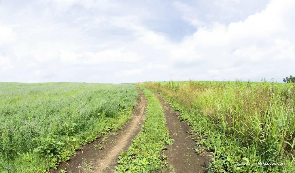 600野外草地图片 草原草地壁纸壁纸,青青草原 草原天空摄影壁纸壁纸图片