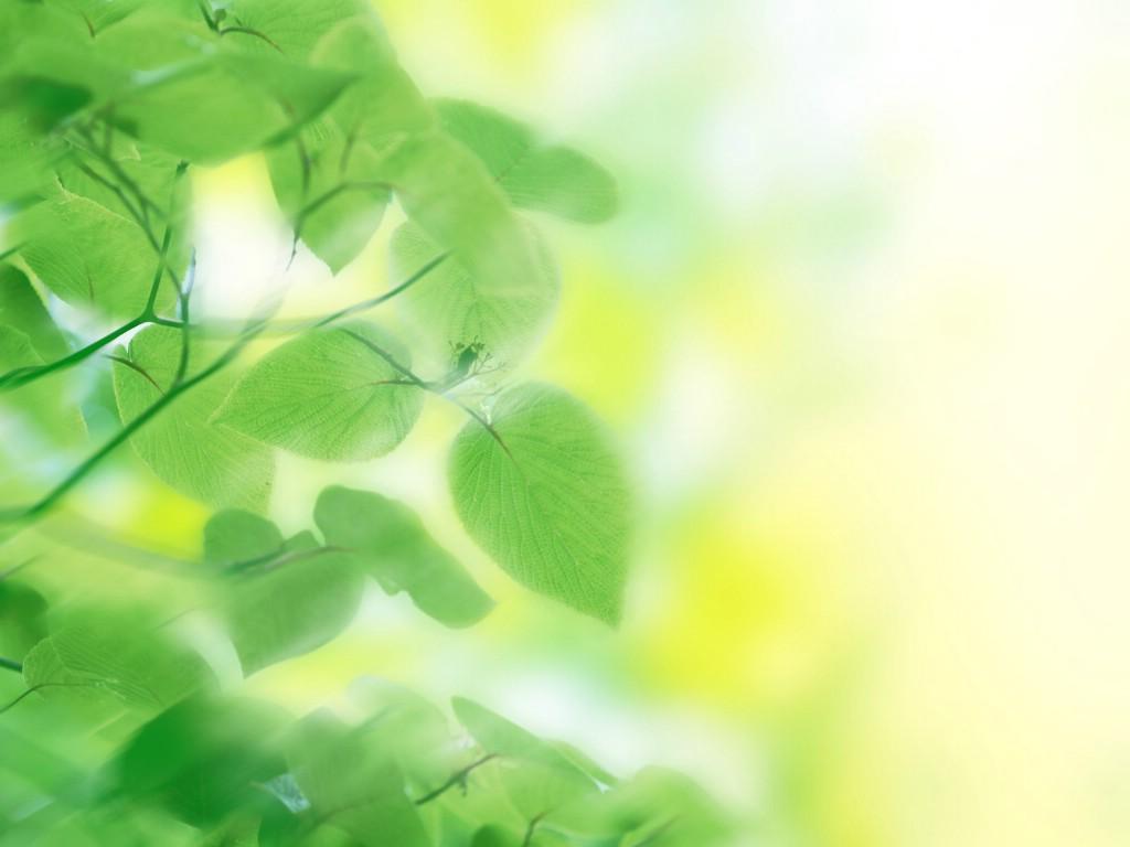 壁纸1024×768清新夏日 水 空 绿叶壁纸 梦幻夏日图片