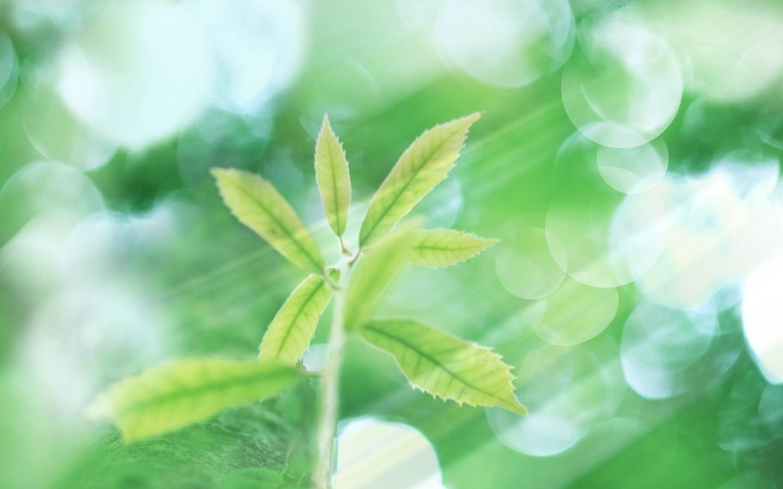 壁纸1440 900清新夏日 水 空 绿叶壁纸 梦幻夏日图片