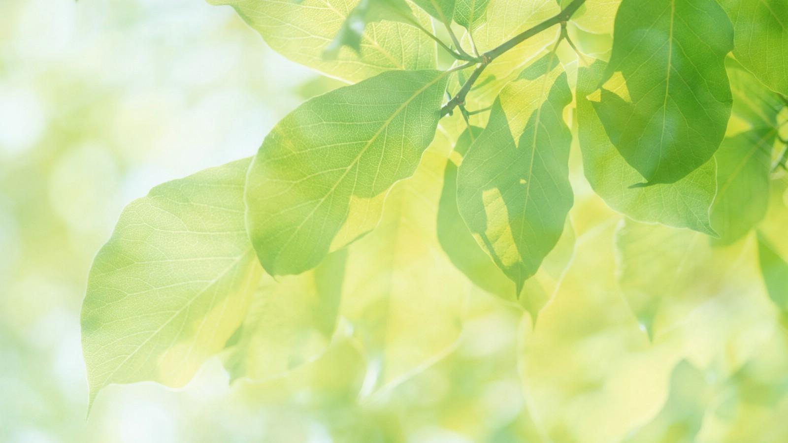 花朵草叶淡雅唯美朦胧小清新高清 精美矢量花朵藤蔓线条高清幻灯片.