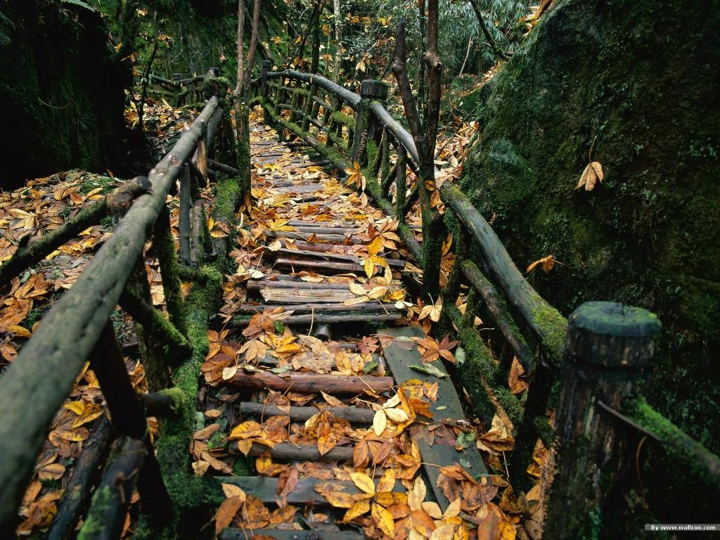 秋天唯美壁纸图片黄昏落叶优美森林珍藏壁纸图片
