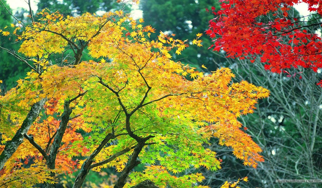 秋天风景壁纸 秋季风景桌面