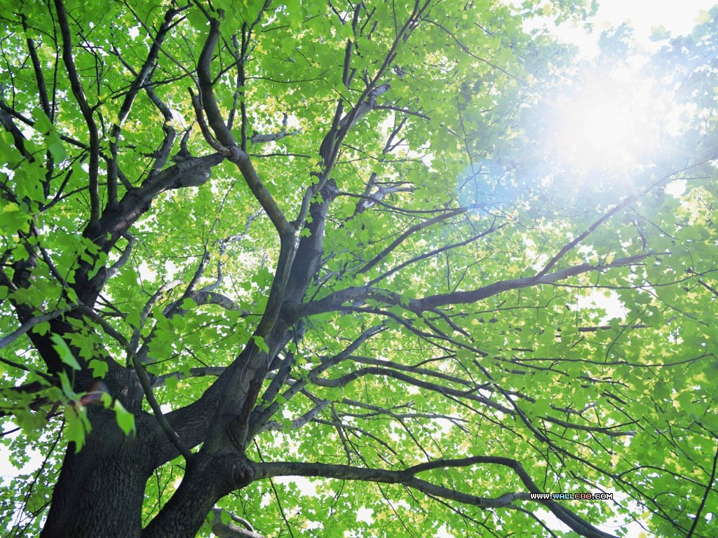 nature spring green tree - photo #14