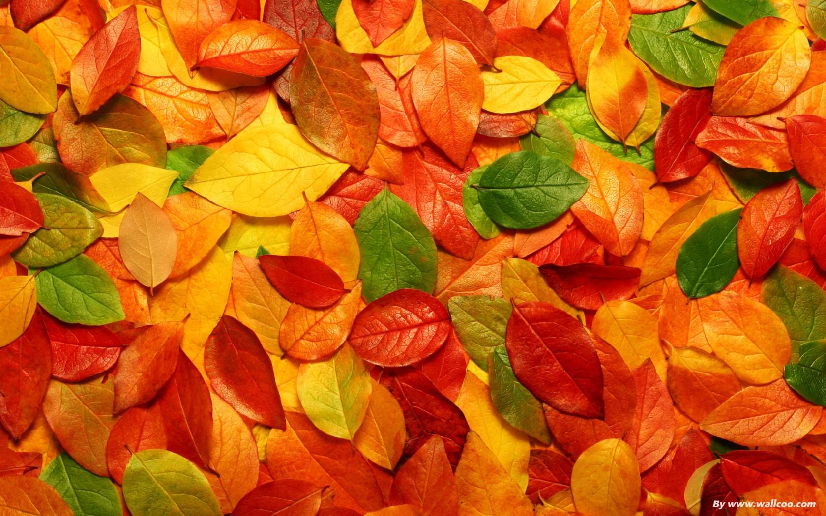 秋天树林落叶高清摄影图片 素材中国16素材网