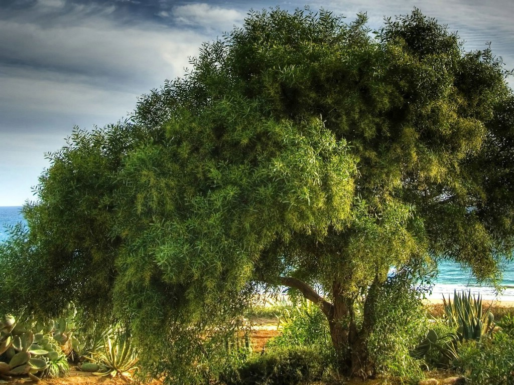 壁纸 风景壁纸/茂盛树木高清风景壁纸 1920 1200