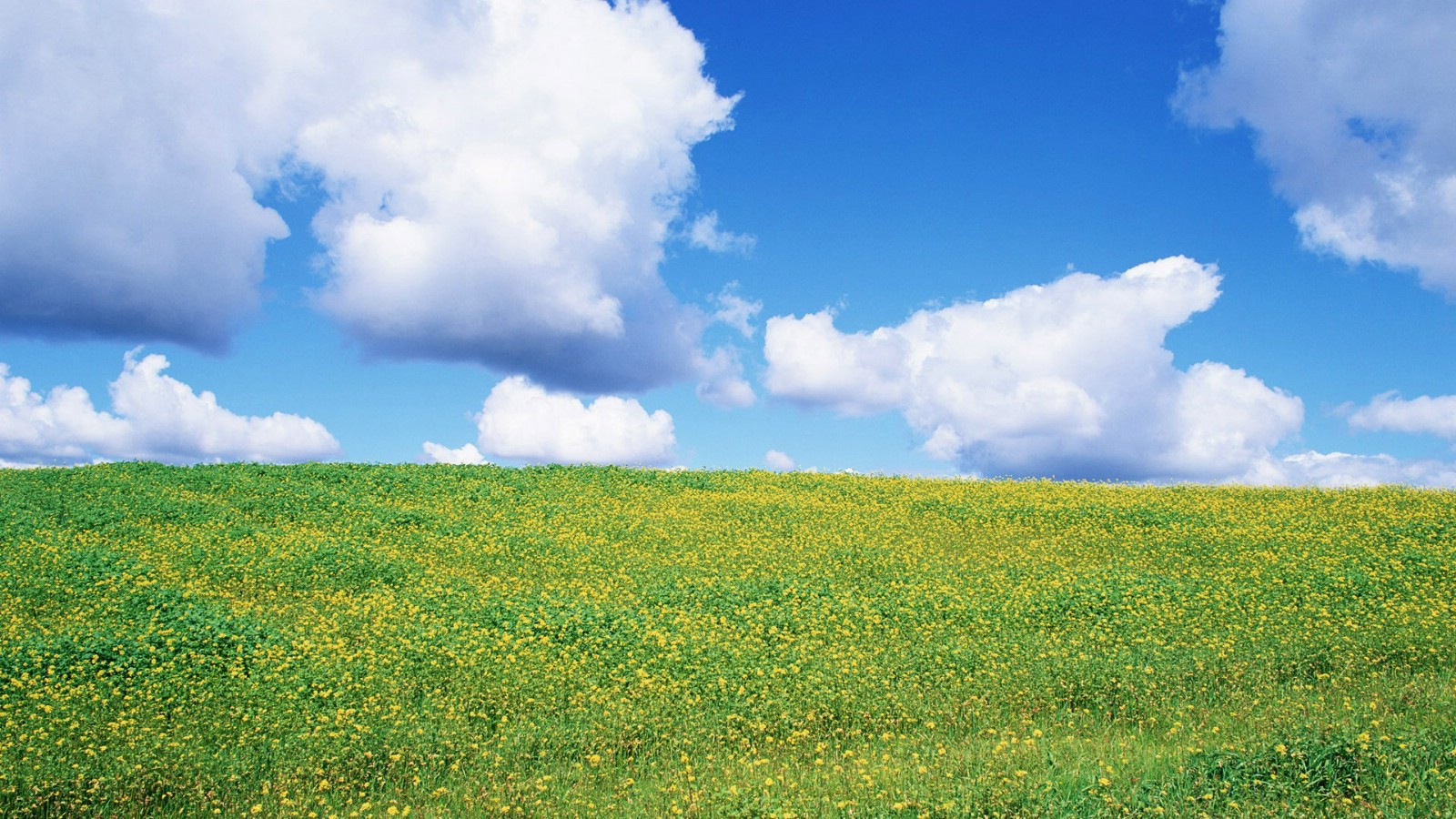壁纸 北海道/北海道花田世界自然风光摄影