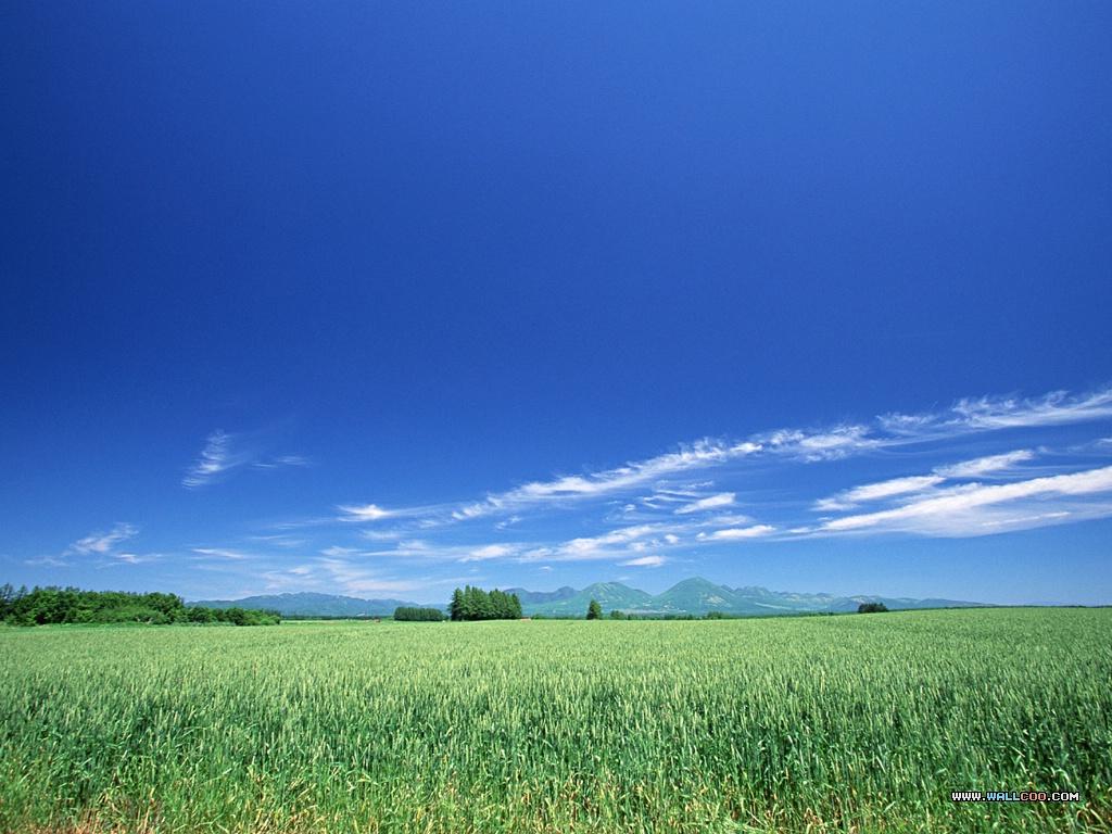 壁纸1024×768天空大地 蓝天白云 蓝天白云绿草地图片 Desktop Wallpaper of Sky Landscape壁纸 天空大地蓝天白云壁纸图片风景壁纸风景图片素材桌面壁纸