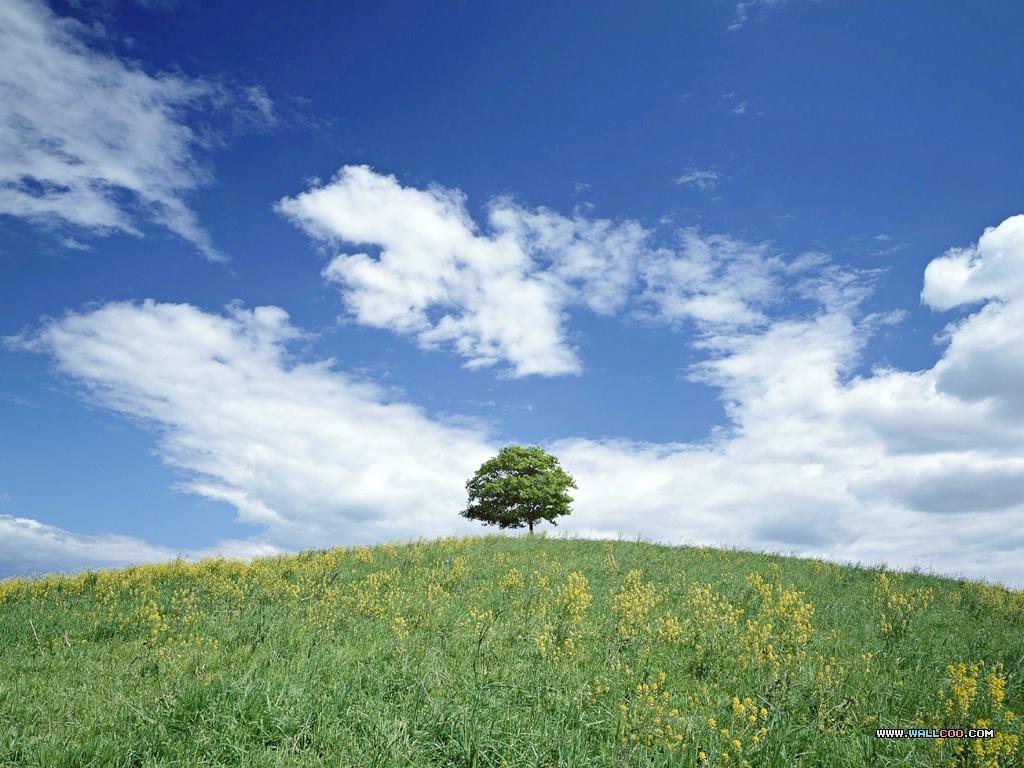 蓝天白云绿草地图片 Wallpaper Sky Landscape壁纸,天空大地蓝天