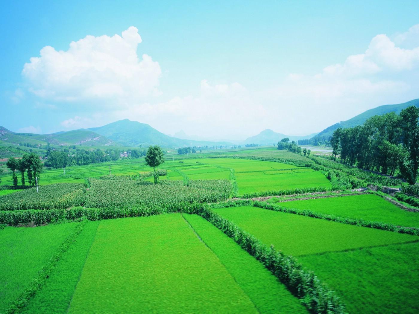 绿色竹林护眼桌面壁纸【绿色风景高清电脑壁
