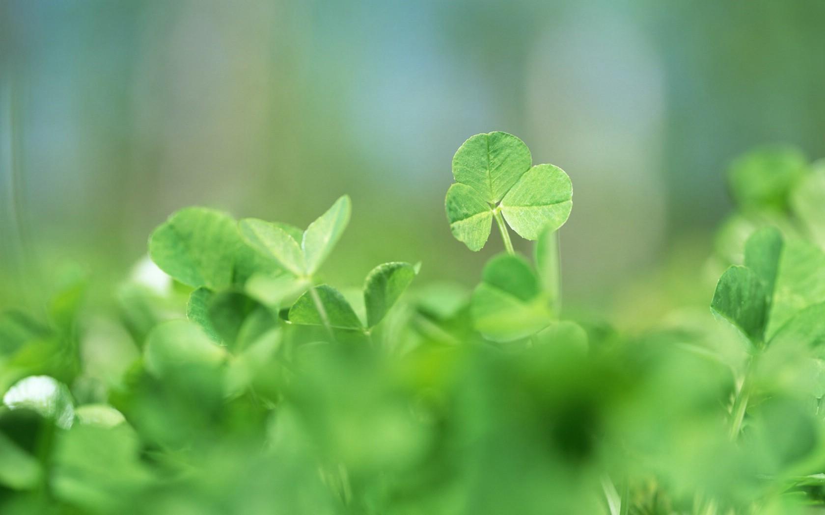 清新绿色田园壁纸