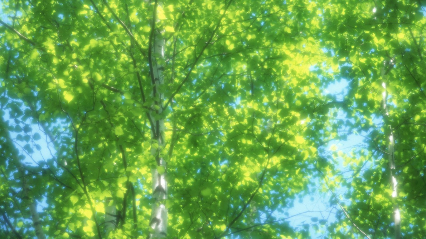 夏日气息清新绿叶高清壁纸壁纸图片-风景壁纸-风景图片素材-桌面壁纸