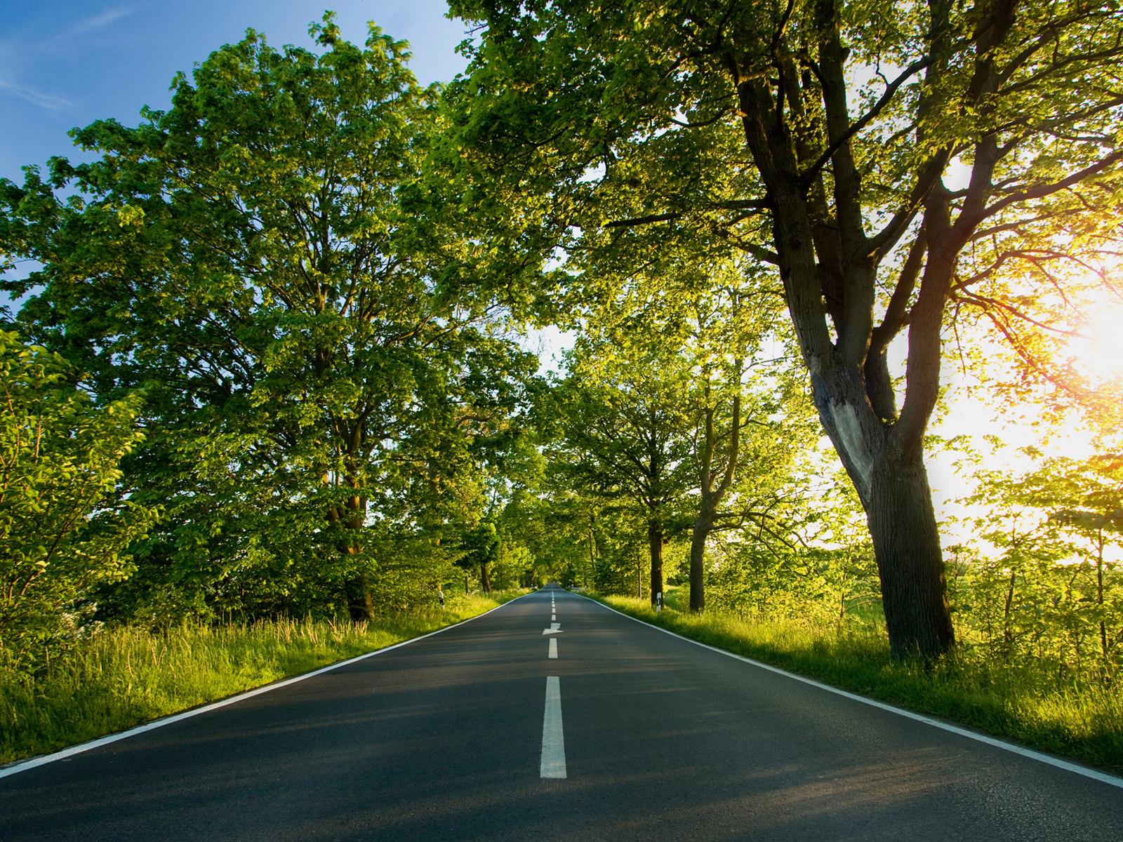 新西兰郊外风景壁纸 新西兰 林荫大道图片壁纸高清图片