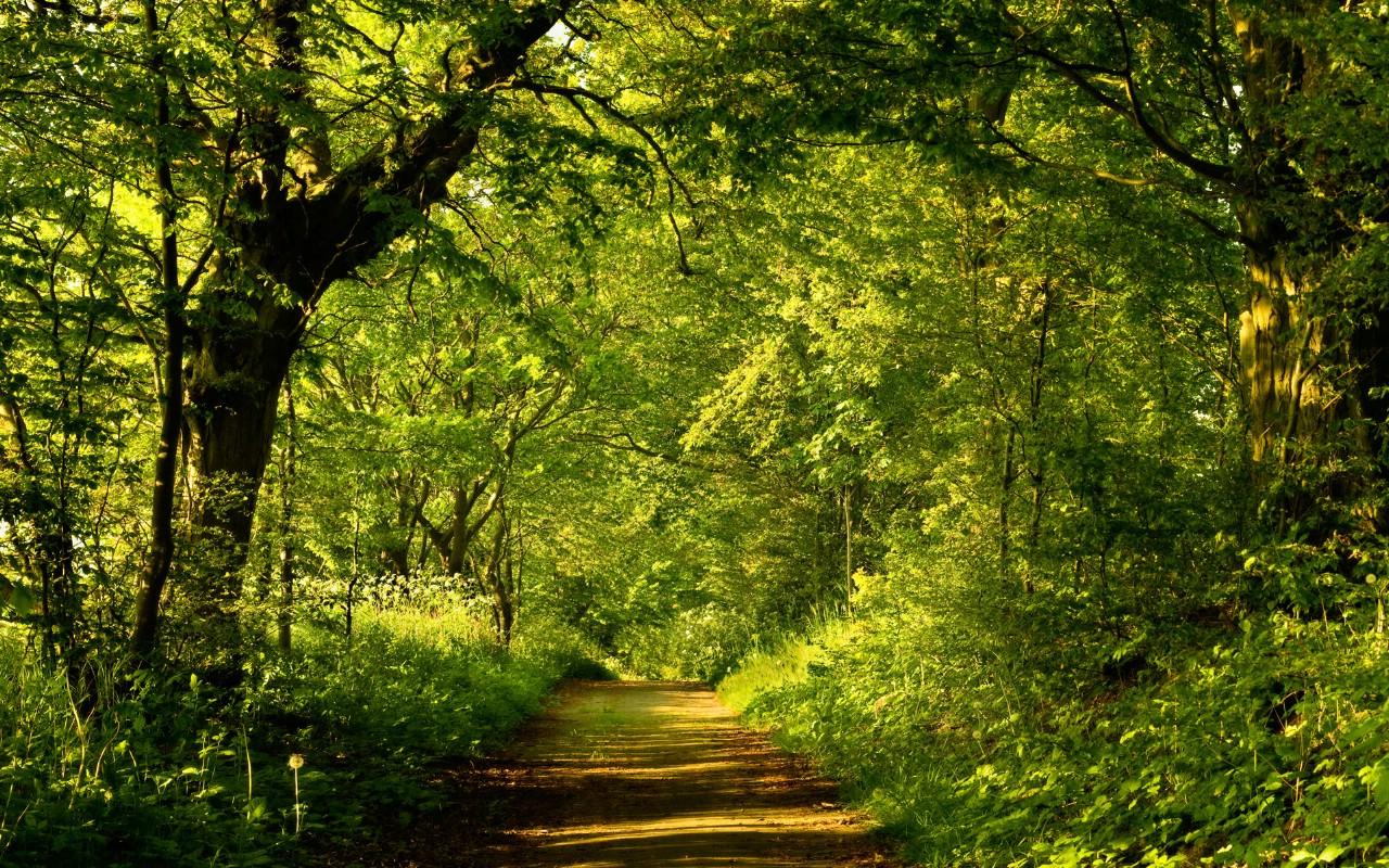 春天森林壁纸 桌面背景图片 高清壁纸下载 彼岸桌