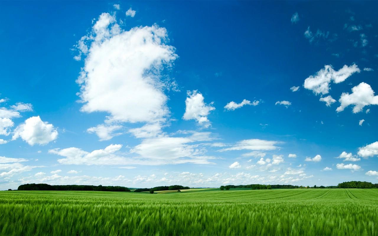 蓝天白云麦苗风景图片