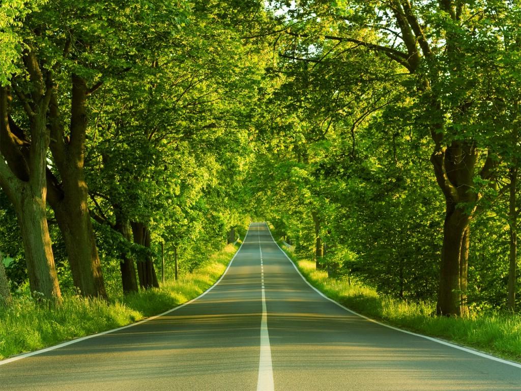 新西兰郊外风景壁纸 新西兰 夏日的林荫大道图片壁纸高清图片