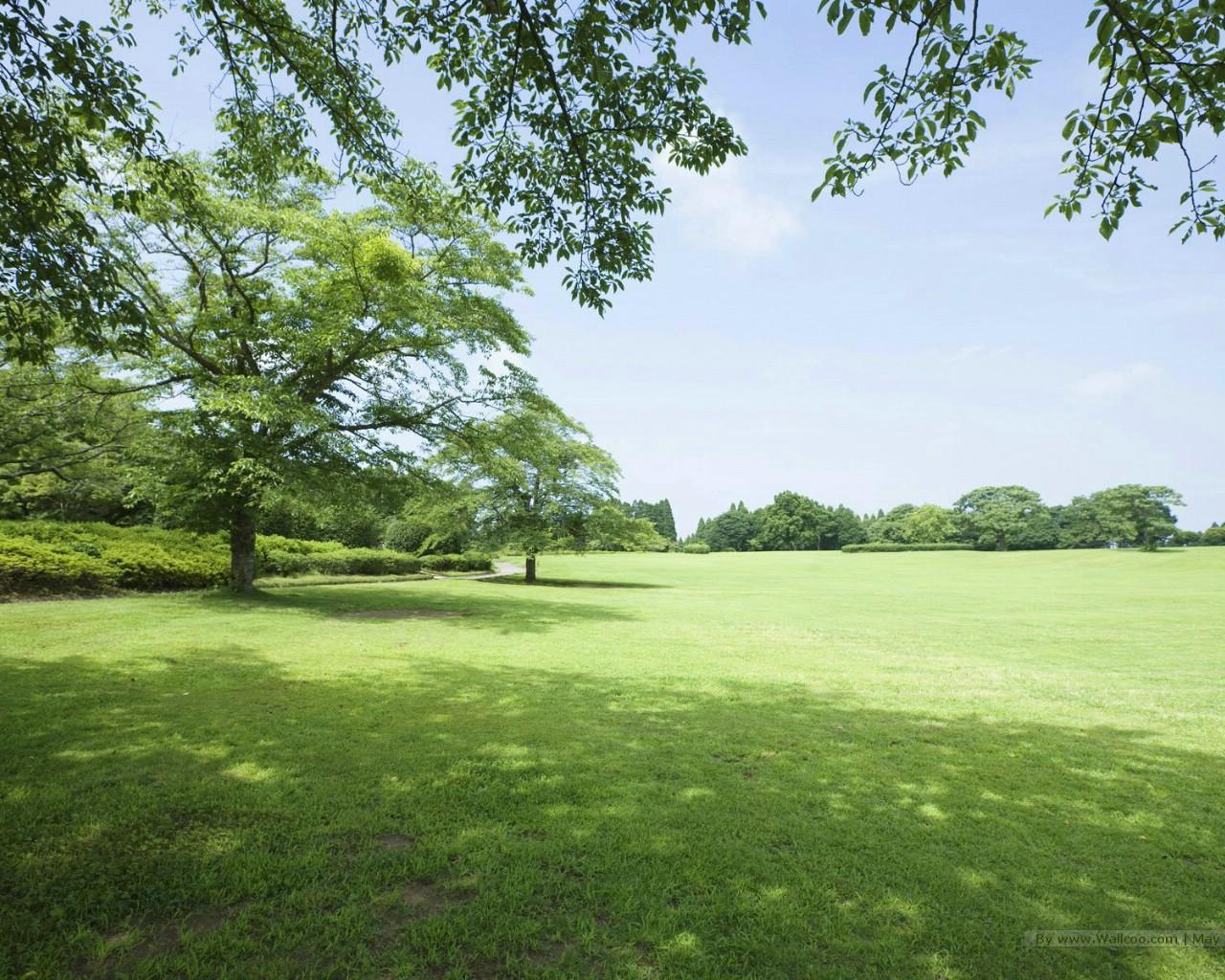 夏天原野与树木图片 阳光草原风景