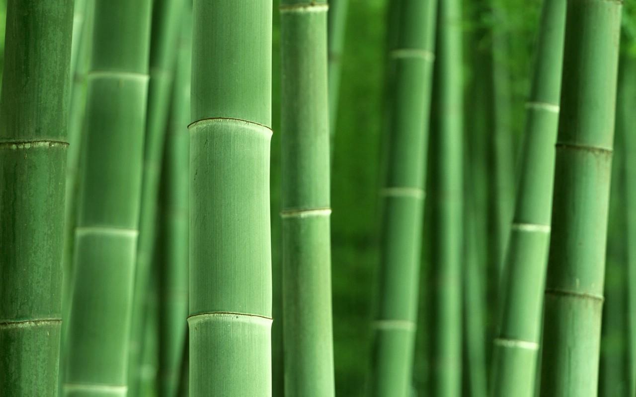 竹子壁纸高清风景图片_竹子风景图片