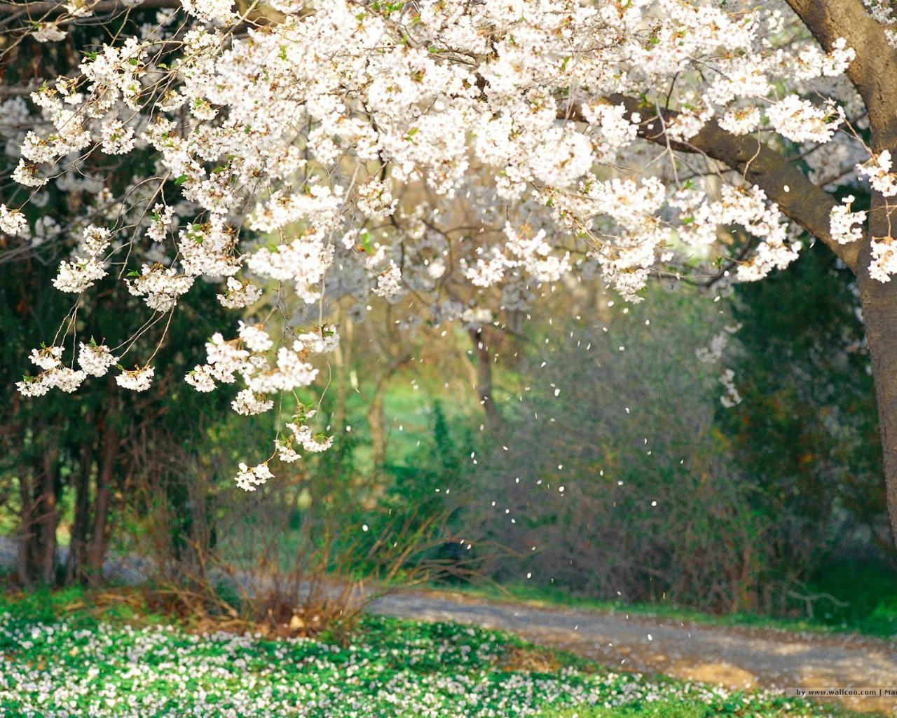 壁纸1280×1024二 春天花卉图片壁纸 Desktop Wallpaper of Spring Flowers壁纸 春暖花开壁纸图片花卉壁纸花卉图片素材桌面壁纸