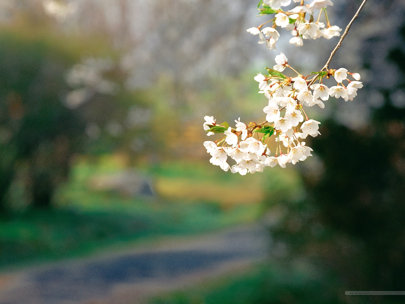 壁纸1600×1200二 春天花卉图片壁纸 Desktop Wallpaper of Spring Flowers壁纸 春暖花开壁纸图片花卉壁纸花卉图片素材桌面壁纸