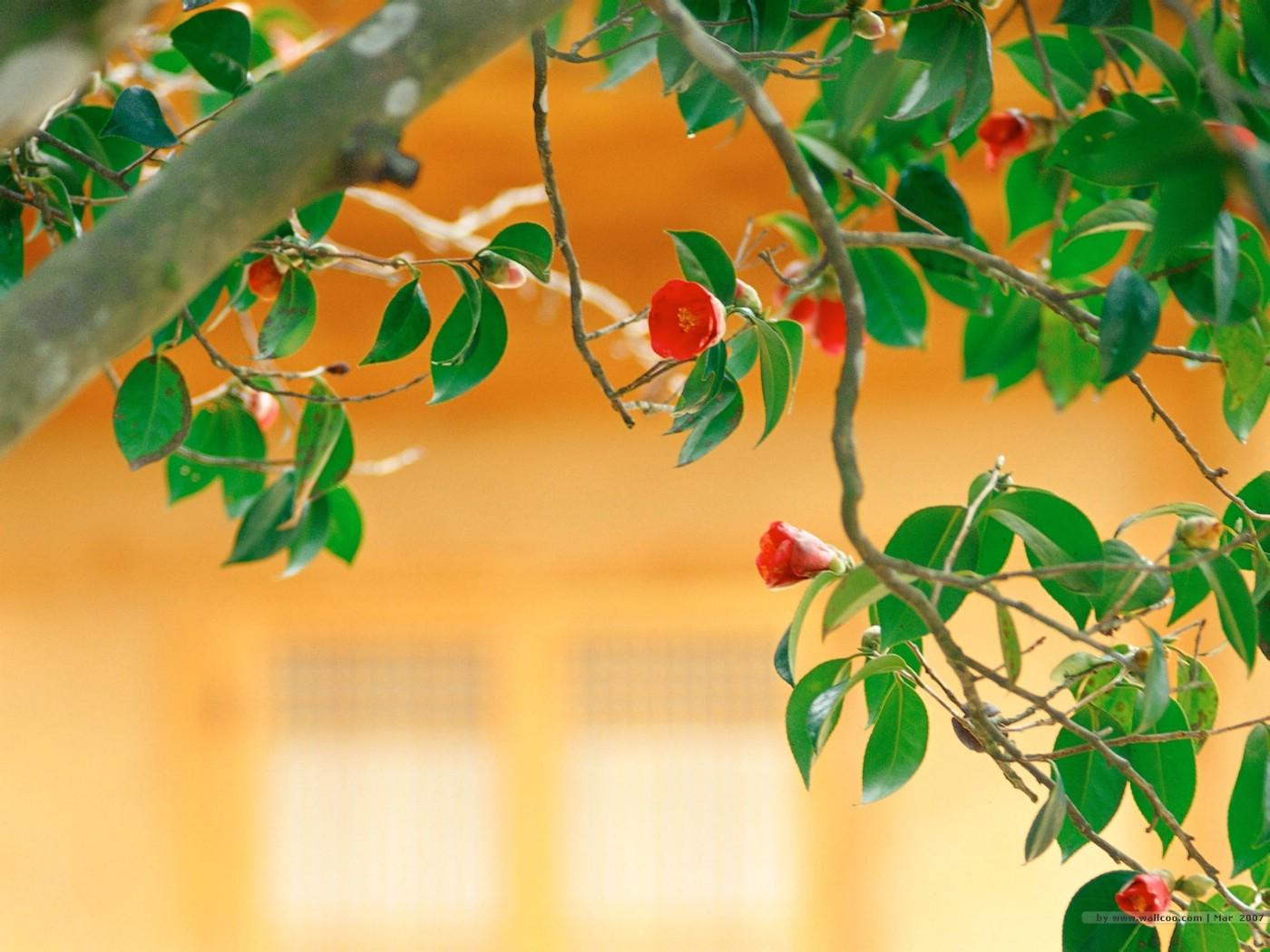 壁纸1400×1050二 春天花卉图片壁纸 Desktop Wallpaper of Spring Flowers壁纸 春暖花开壁纸图片花卉壁纸花卉图片素材桌面壁纸
