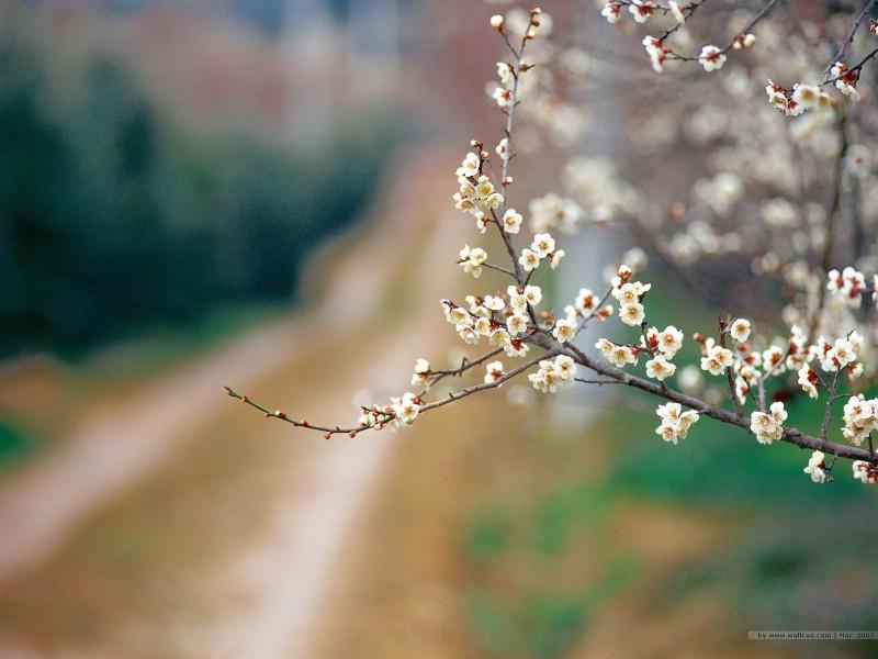 壁纸800×600二 春天花卉图片壁纸 Desktop Wallpaper of Spring Flowers壁纸 春暖花开壁纸图片花卉壁纸花卉图片素材桌面壁纸