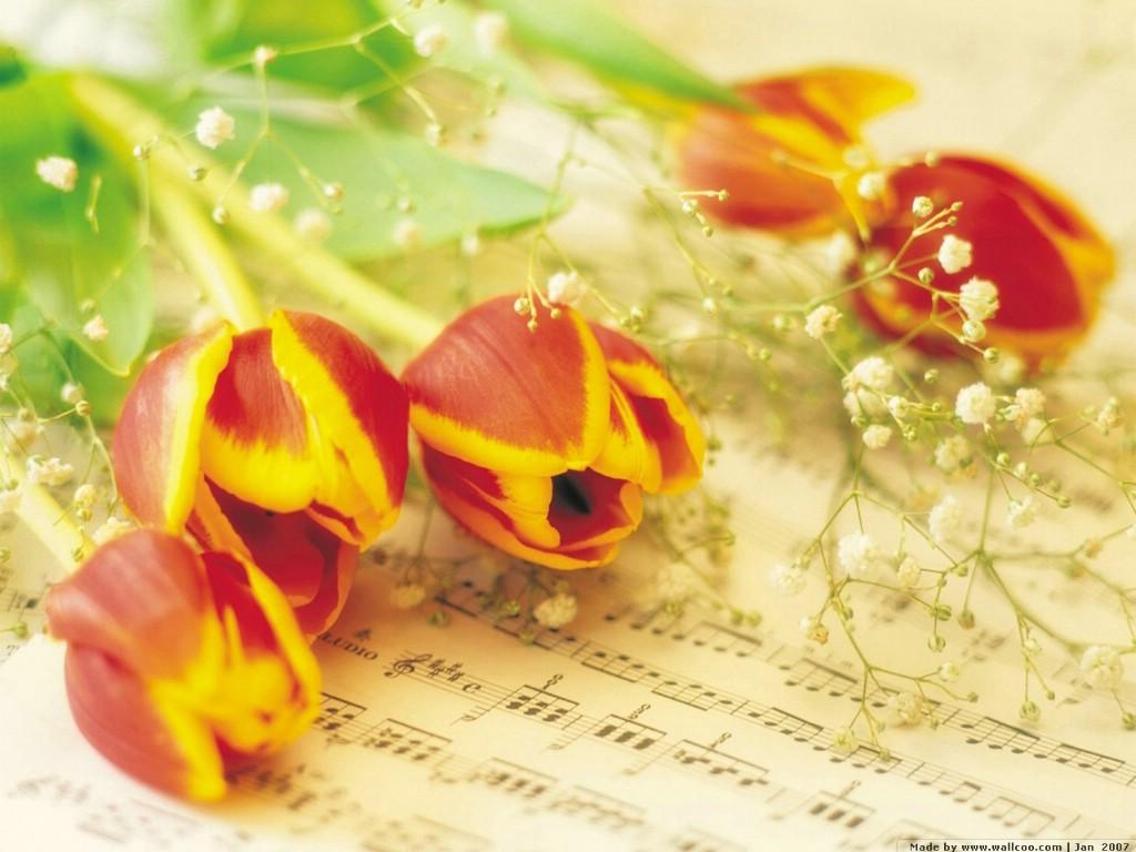壁纸1024×768浪漫花卉艺术图片 Desktop Wallpaper of Romantic flowers壁纸 典雅花卉艺术摄影壁纸图片花卉壁纸花卉图片素材桌面壁纸