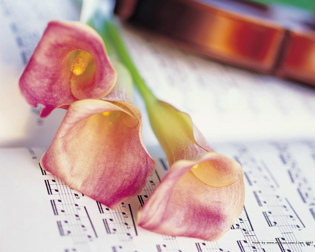 壁纸1280×1024浪漫花卉艺术图片 Desktop Wallpaper of Romantic flowers壁纸 典雅花卉艺术摄影壁纸图片花卉壁纸花卉图片素材桌面壁纸