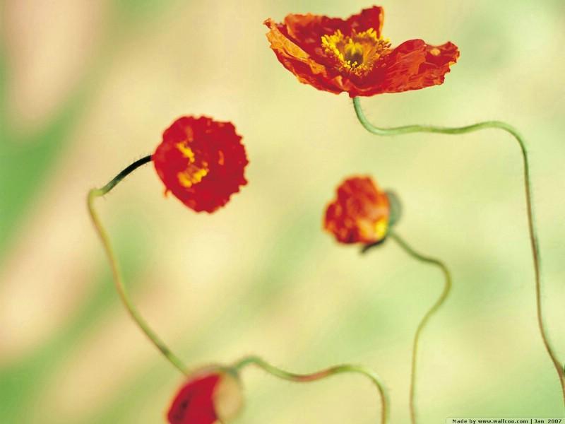 壁纸800×600浪漫花卉艺术图片 Desktop Wallpaper of Romantic flowers壁纸 典雅花卉艺术摄影壁纸图片花卉壁纸花卉图片素材桌面壁纸