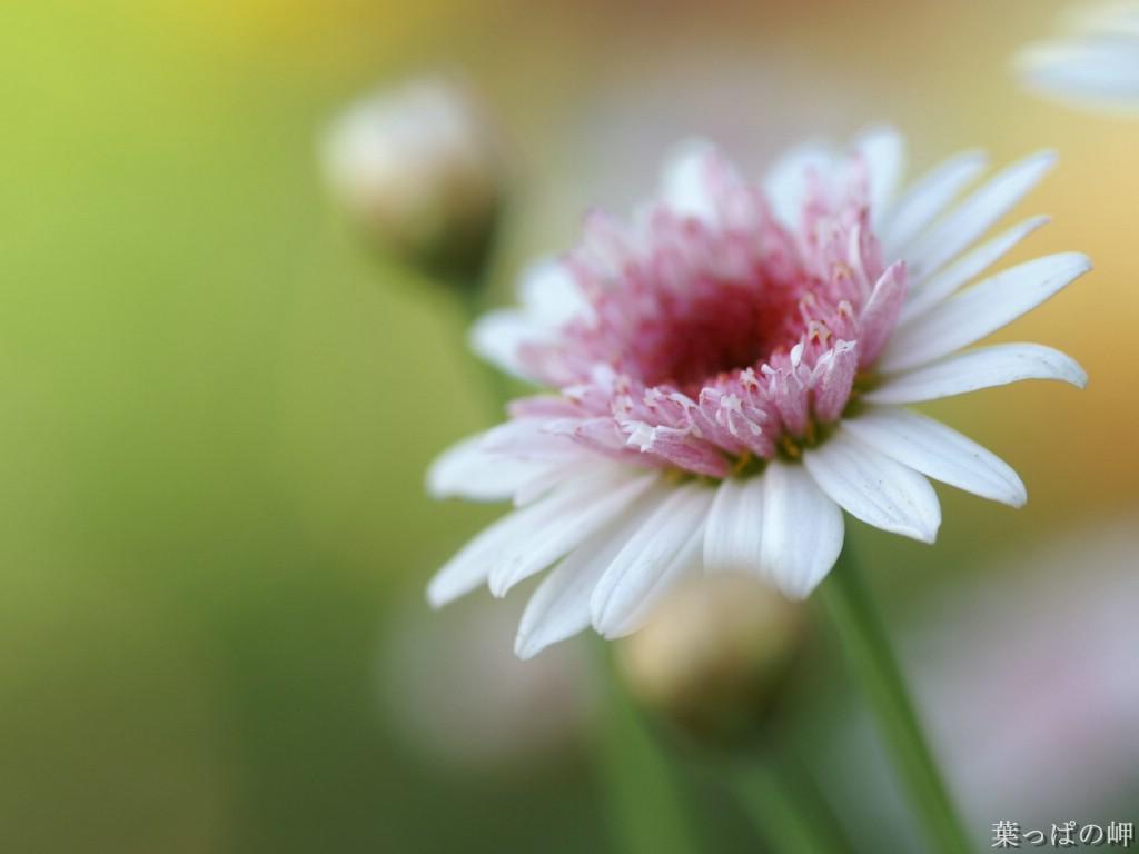 壁纸1024×768数码相机花卉摄影壁纸 八 Flower wallpapers by Digital Camera Digital Photography壁纸 个人花卉摄影壁纸八壁纸图片花卉壁纸花卉图片素材桌面壁纸