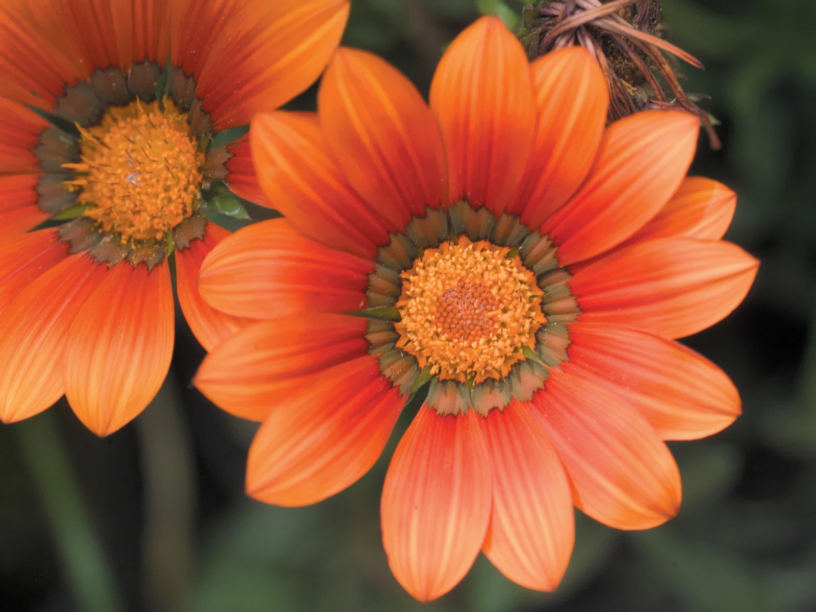 壁纸1600×12006种尺寸 韩国花卉摄影壁纸 Professional flower photography壁纸 韩国花卉摄影集壁纸图片花卉壁纸花卉图片素材桌面壁纸