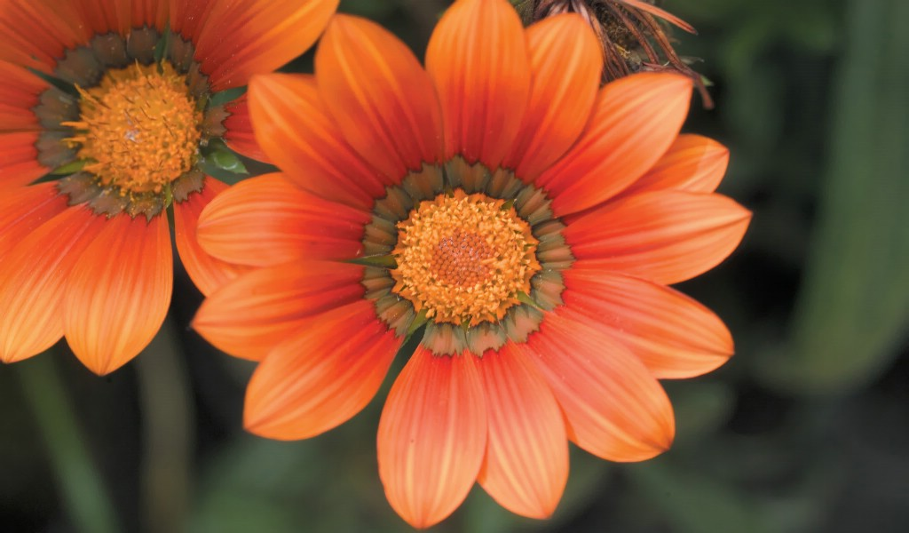 壁纸1024×6006种尺寸 韩国花卉摄影壁纸 Professional flower photography壁纸 韩国花卉摄影集壁纸图片花卉壁纸花卉图片素材桌面壁纸