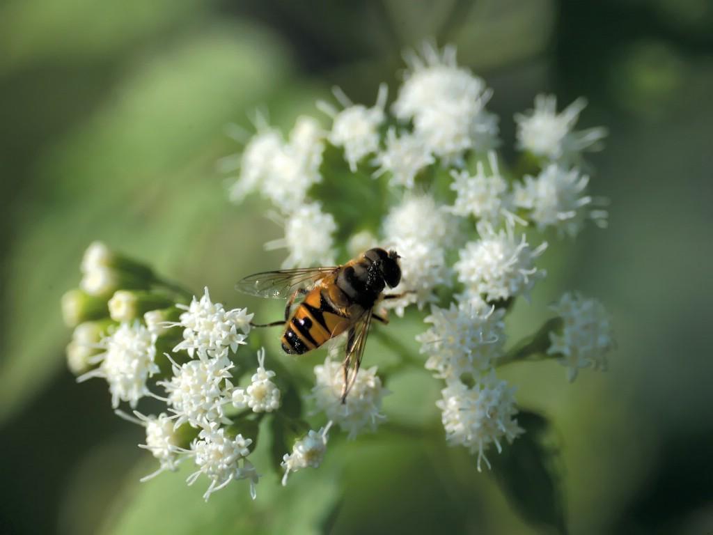 壁纸1024×7686种尺寸 蜜蜂采花蜜壁纸 Professional flower photography壁纸 韩国花卉摄影集壁纸图片花卉壁纸花卉图片素材桌面壁纸