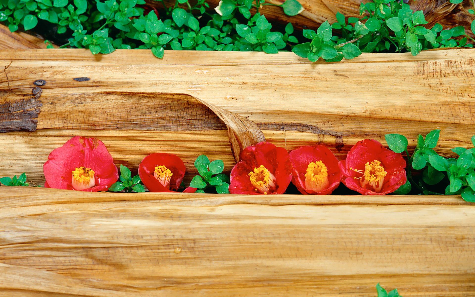 壁纸1920×12006种尺寸 韩国花卉摄影壁纸 Professional flower photography壁纸 韩国花卉摄影集壁纸图片花卉壁纸花卉图片素材桌面壁纸
