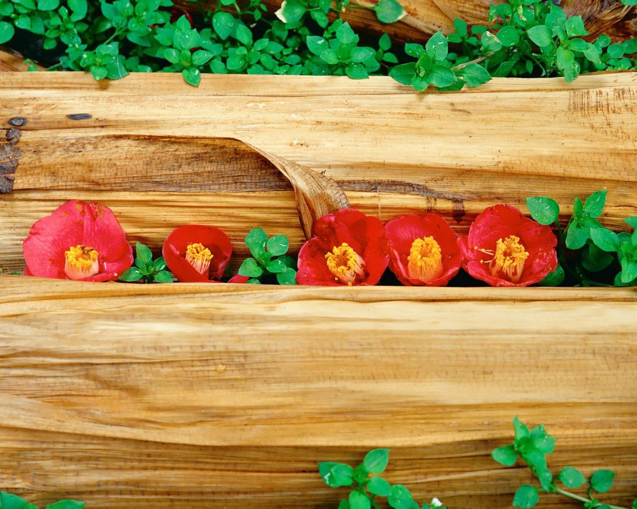 壁纸1280×10246种尺寸 韩国花卉摄影壁纸 Professional flower photography壁纸 韩国花卉摄影集壁纸图片花卉壁纸花卉图片素材桌面壁纸
