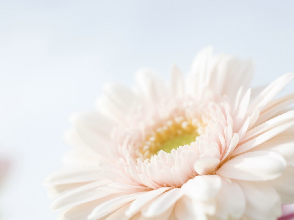 柔光摄影 -梦幻唯美野花摄影壁纸图片-花卉壁纸-花卉图片素材-桌面