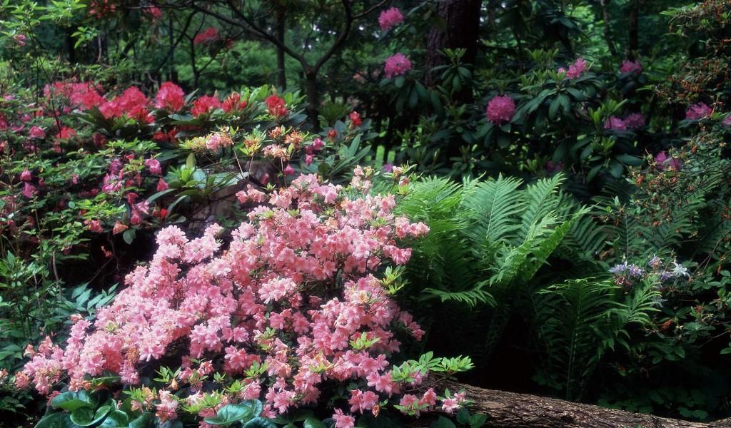 玫瑰花海风景图片唯美意境的玫瑰花海_点力图库