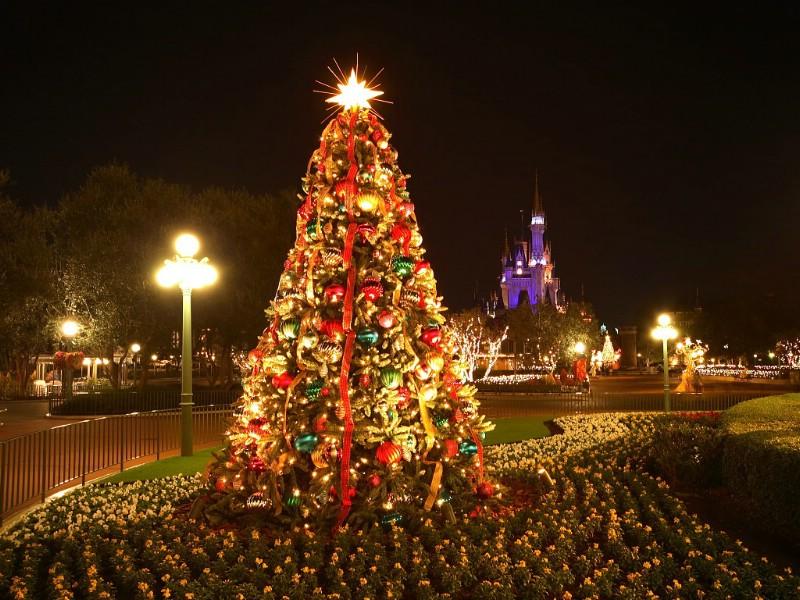 壁纸800 600圣诞节夜景壁纸 东京迪士尼乐园的圣诞夜电脑...